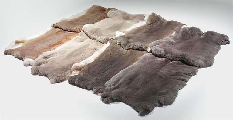 Rabbit skins produced in Europe with traceability